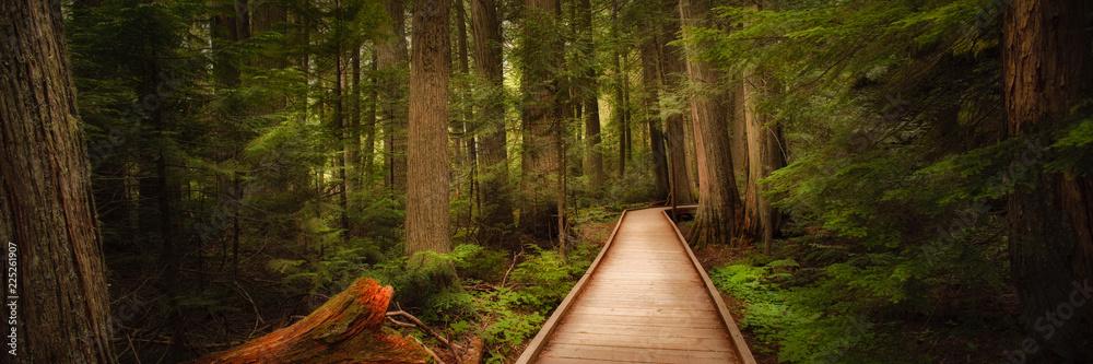 Fototapeta Trail of the Cedars in Glacier National Park, Montana, USA