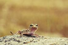 Cute Curious Gecko