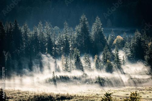 poranna-mgla-wsrod-drzew-iglastych-bawaria