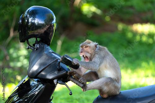 Fotografering  Crzay funny monkey
