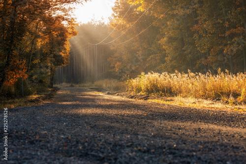 Fotografie, Obraz  Herbstliche Waldweg