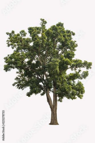 Fotobehang Bomen Beautiful green trees isolated on white background with a high resolution suitable for graphic. with clipping path