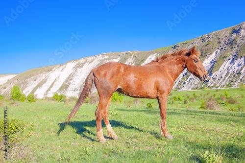 Fotografía  brown horse in a meadow near mountains