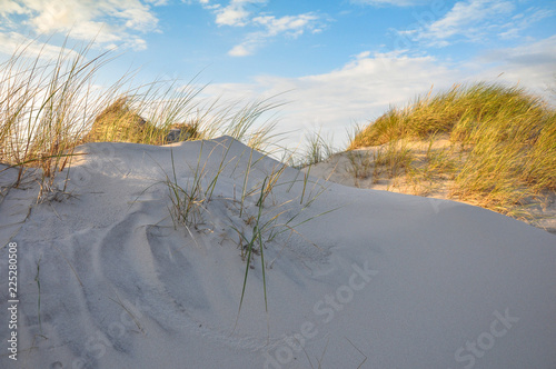 Poster Gris Moving dunes in the Slowinski National Park near the city of Leba, Baltic Sea Coast, Poland