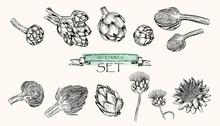 Vector Illustration. Pen Style Drawn Artichoke Set.