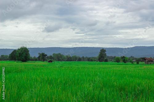 Deurstickers Groene Green rice field near the mountain Beautiful landscape