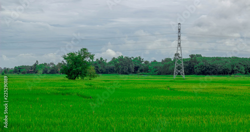 Spoed Foto op Canvas Groene Green rice field near the mountain Beautiful landscape