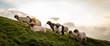 canvas print picture - Eine Herde Schafe am Berg