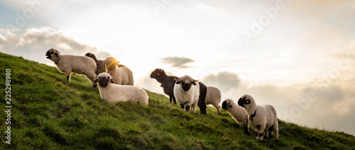 Tuinposter Schapen Eine Herde Schafe am Berg