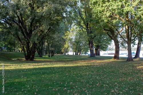 Fotografia, Obraz  parco