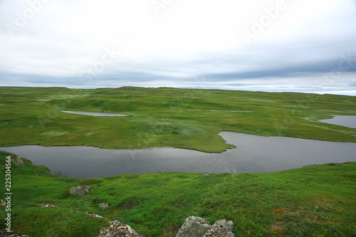 Fotobehang Wit landscape tundra / summer landscape in the north tundra, moss, ecosystem