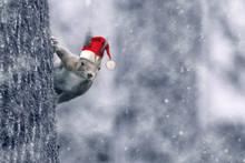 Weihnachtsgrüße Vom Eichhörnchen