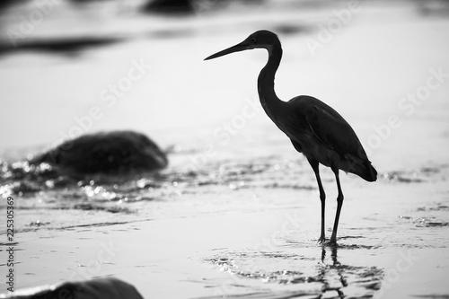 Photo  Birds walk along the seashore