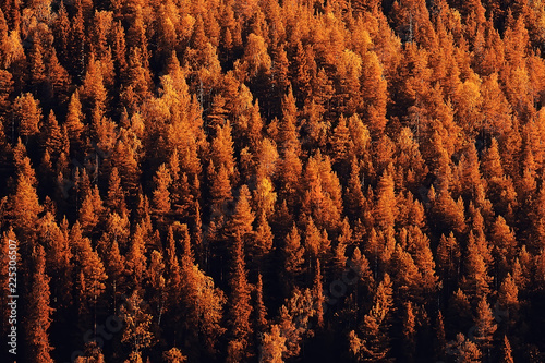 Fotobehang Bruin autumn forest landscape / yellow forest, trees and leaves October landscape in the park