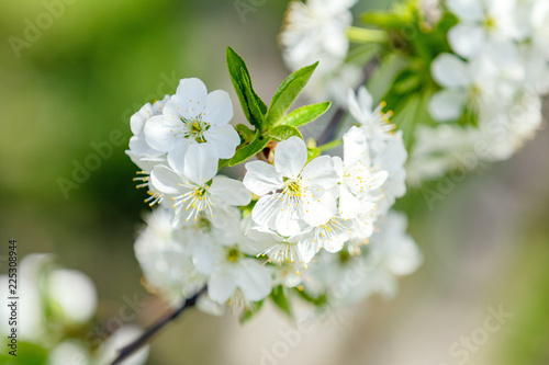 Foto op Plexiglas Lente Spring background art with white cherry blossom