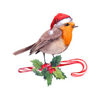 Robin Bird In Red Santa Hat On...