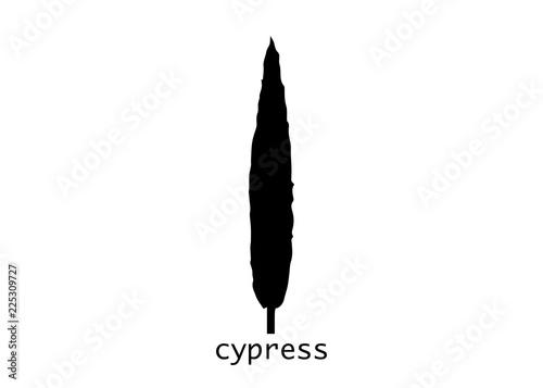 Foto  Cypress icon