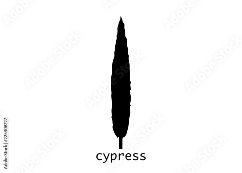 Fotografiet  Cypress icon
