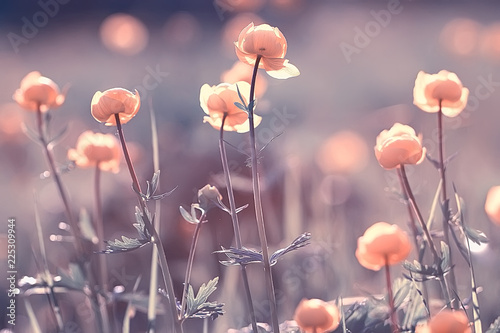 Poster Printemps vintage background little flowers, nature beautiful, toning design spring nature, sun plants