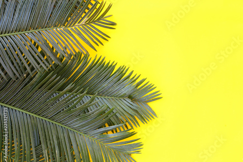 Fotografía  Freshness green leaves of wild palm on yellow paper background.