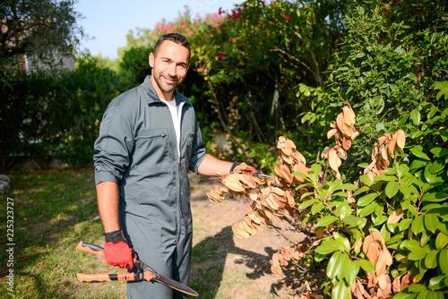 Cuadros en Lienzo handsome young man gardener trimming hedgerow in a garden park outdoor