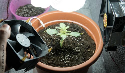 Купить оборудование для марихуаны польза марихуана