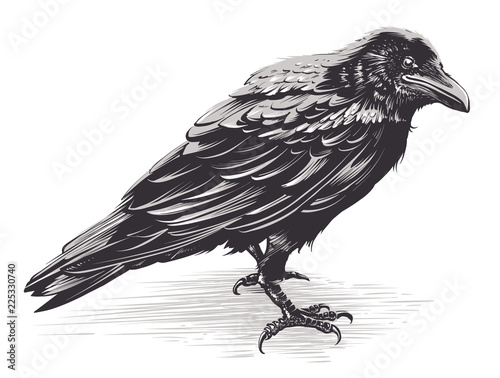 Photo Vector Crow Art on White