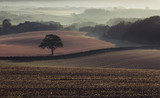 Rolling Fields at Misty Morning - 225336739