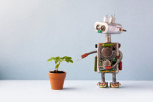 Robot With A Small Green Sprout Plant In A Clay Flower Pot. Organic Eco Life Concept. Gray Wall Background, Copy Space