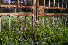 Rusty Iron Gate Surrounded By Green Grass And Flowers