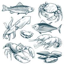 Sketch Seafood. Lobster Shellfish Fish Shrimp. Hand Drawn Seafoods Meal Vintage Vector Set Isolated. Illustration Of Lobster And Shellfish Illustration