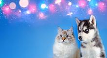 Cat And Dog Together , Neva Ma...