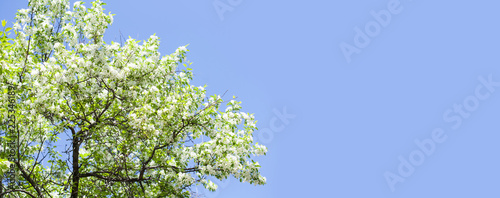 Fotobehang Bomen Beautiful floral spring time background. Blossoming white petals tree branch. blue sky background, copy space. Shallow depth of field