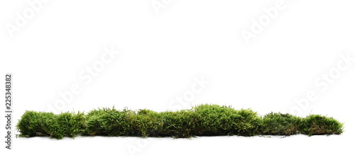 Poster Gras Green moss with grass isolated on white background