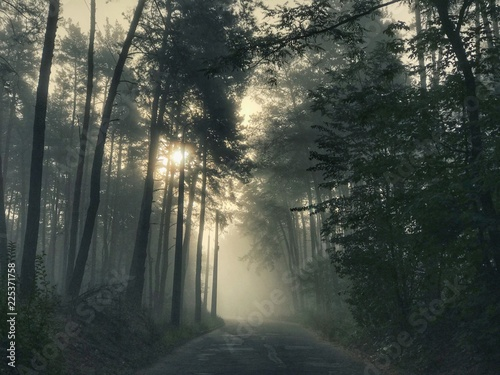 Foto op Canvas Begraafplaats Sun rays coming through the branches in a autumn foggy day into the forest