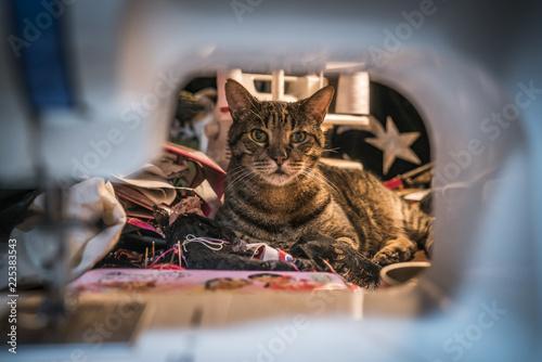 Chat dans un atelier de couture couture