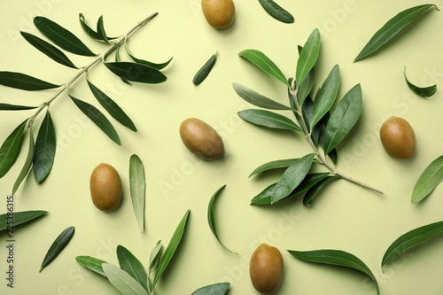 Fototapeta Flat lay composition with fresh green olive leaves, twigs and fruit on color background obraz