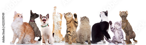 Fotografia  lovely large group of cats looking up to side