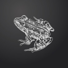 Hand Drawn Frog Sketch Symbol Isolated On Chalkboard. Vector Amphibian And Reptiles Element In Trendy Style