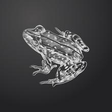 Hand Drawn Frog Sketch Symbol ...
