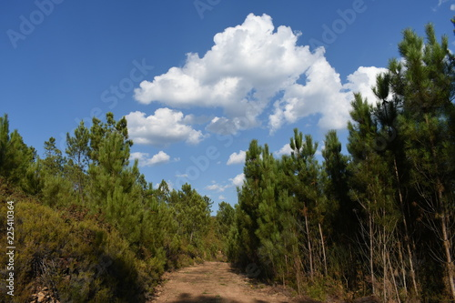 view of the forest with some clouds on the blue sky