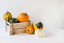 Pumpkin Decoration For Halloween, Colorful Ornamental Pumpkins, Gourds, Autumn, Harvest, Horizontal, With Copy Space Right