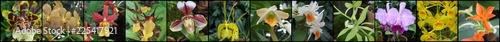 Naklejka premium Orchidea i storczyk