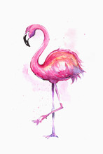 Watercolor Exotic Flamingo. Su...