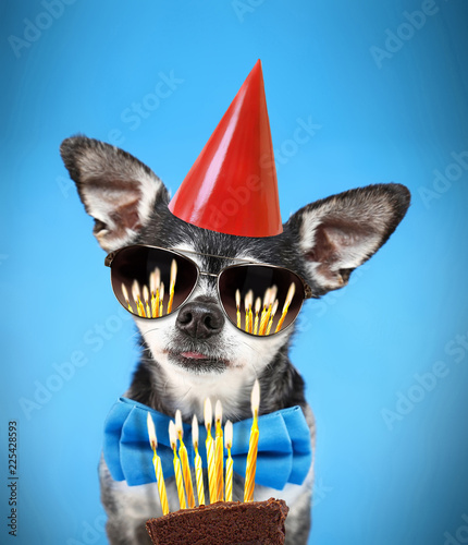 фотографія  cute chihuahua with his tongue poking out wearing a bow tie and sunglasses and b