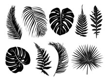 Tropical Leaves Collection Set...