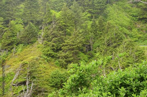 Fotografie, Obraz  Intense green covers steep slopes