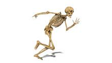 Funny Skeleton Running, Human ...