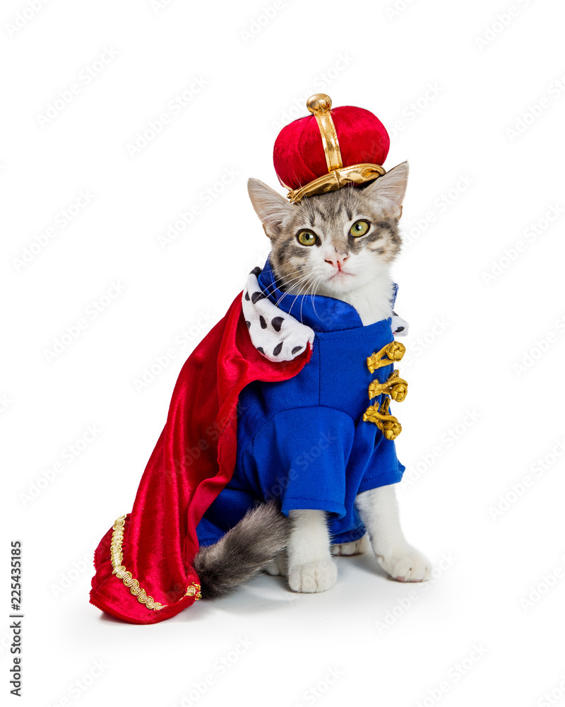 Cat In King Halloween Costume