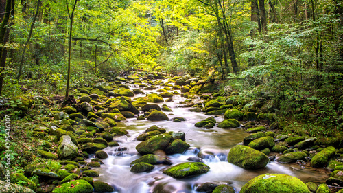 Aluminium Prints Forest river Creek Running Through Roaring Fork in Smoky Mountains